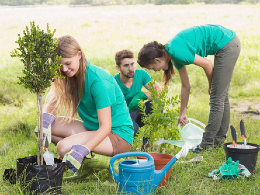 Tree Planting Services in Hague, Virginia